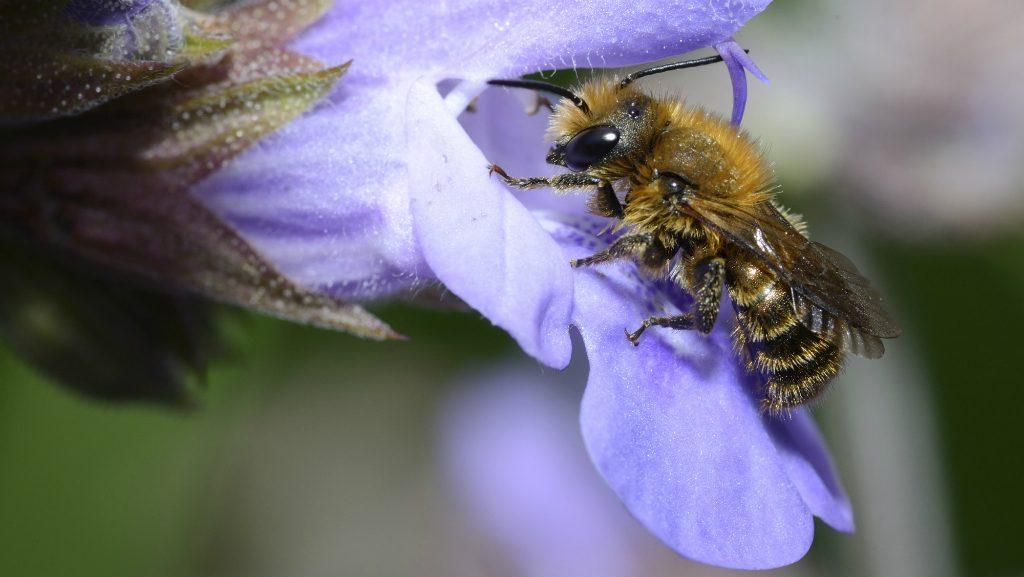 A méheket így menthetjük meg